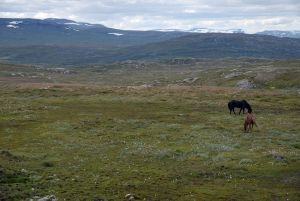 Parc national Hardangervidda