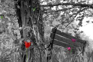 Jardin en floraison