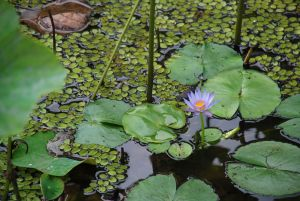 Pamplemousse, Jardin botanique