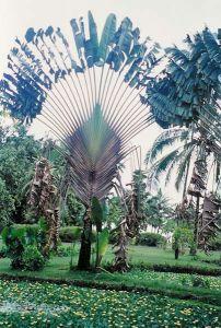 Tahiti, Jardin botanique