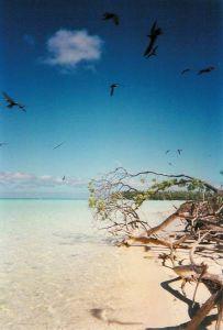 Tetiaroa, Ile aux oiseaus